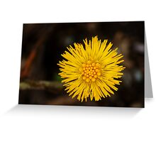 Spring's first little suns  Greeting Card