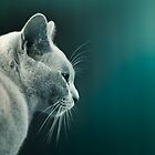 Cute Cat Portrait  by Cubagallery