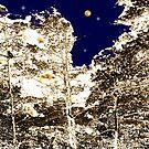 Cedars at Midnight by Neophytos