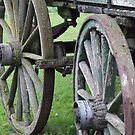 Wagon Wheels - Willowbank, New Zealand by BreeDanielle