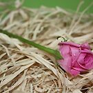Pink Wedding Rose by MichelleRees