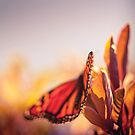 Nature - Monarch Butterfly by Cubagallery
