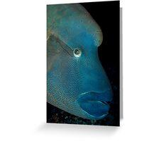 Napoleon fish Greeting Card