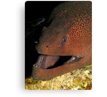Gant moray eel Canvas Print