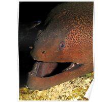 Gant moray eel Poster
