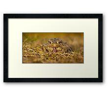 Frog Framed Print