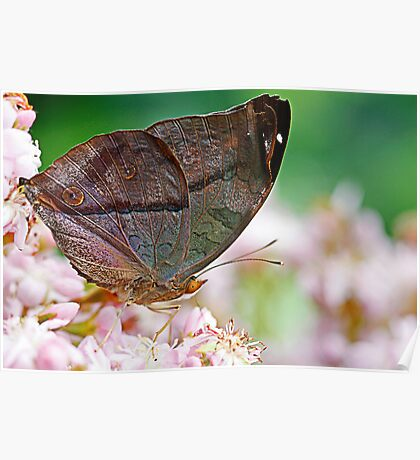 butterfly leaf Poster