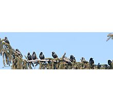 A Starling Convention Photographic Print