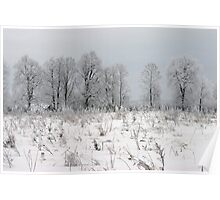 Grassland in winter time Poster