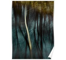 Reflections In Lou Campbell Nature Preserve Poster