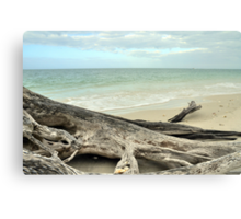 Stump at Lover's Key Canvas Print