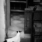A Cat with a Mission by Noam Gordon