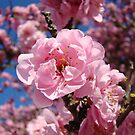 Flowering Tree Blossoms Calendars Photography by BasleeArtPrints