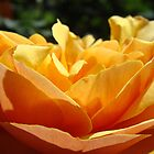 Glowing Orange Summer Rose Flower art Baslee Troutman by BasleeArtPrints