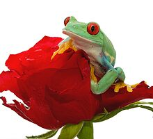 Valentine Frog by Val Saxby