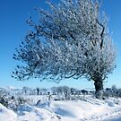Tree in the snow by heatherbyrne