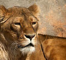 lioness by KathleenRinker