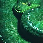 Emerald Green Tree Boa by ©  Paul W. Faust