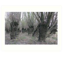 A Forest of Pollard Willows Art Print