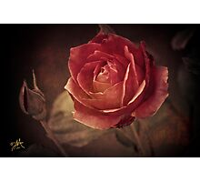 A Little Piece of Beauty Photographic Print