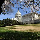 The United States Capital - Washington D.C.  -  A Celebration of Spring by Matsumoto