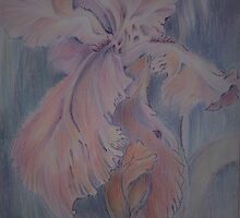 Iris blooms by Ellen Keagy