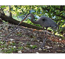 The Hunt For Nest Materials Photographic Print