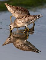Dowitcher Reflections by Martin Smart