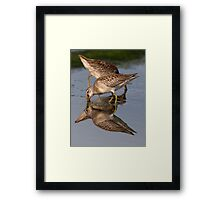 Dowitcher Reflections Framed Print