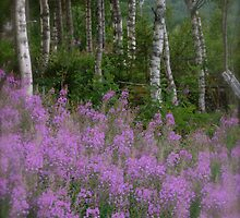 Nordland  forest landscape. Norway . by Brown Sugar. Views (149) favorited by (3) thx! by © Andrzej Goszcz,M.D. Ph.D