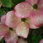 Dogwood Rain by Christine Quetola