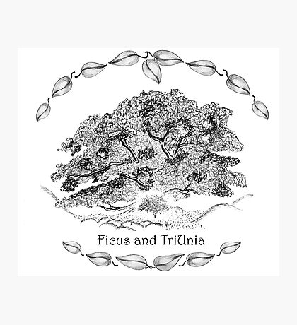 Ficus and TriUnia - the Centre of the Valley Photographic Print