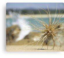 Traveller - Shelley Beach, Moruya, NSW, Australia. Canvas Print