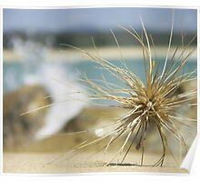 Traveller - Shelley Beach, Moruya, NSW, Australia. Poster