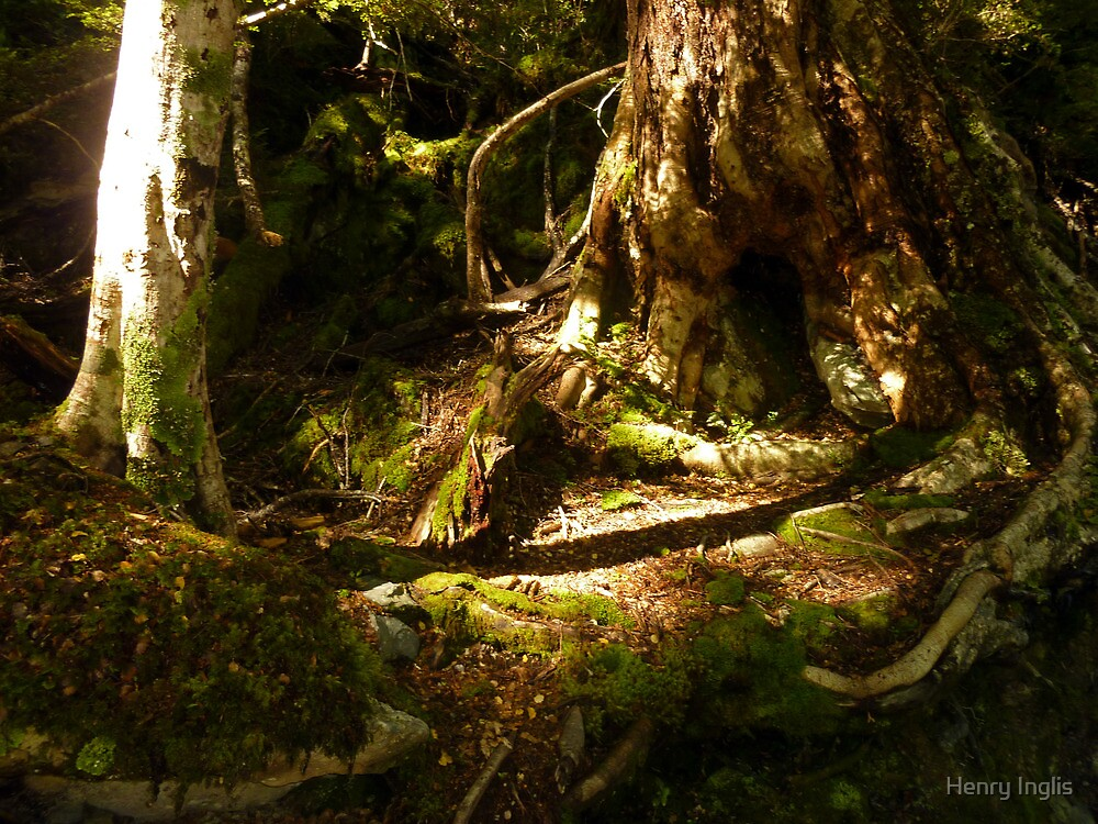Archaic Beech Forest - Routeburn Track, Fiordland and Mount Aspiring National Parks.  by Henry Inglis