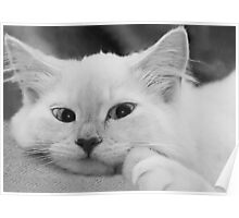 Puddy Cat Poster