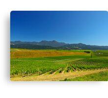 New Zealand Vineyard Canvas Print