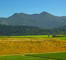 New Zealand Plantation by 104paul