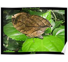 Butterfly (Asia) ~ Indian Dean Leaf Poster