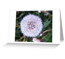 Nature's Disco Ball Greeting Card