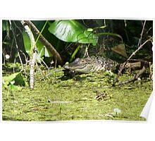 Wild Gator Poster