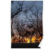 Bosque Sunset - Albuquerque, New Mexico Poster