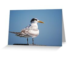 Royal Tern on pier Greeting Card