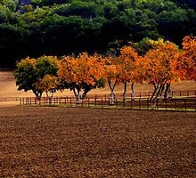 Black Mountain Ranch by gommie