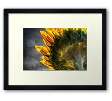 The Other Side Of Sunflowers Framed Print