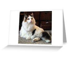 Curious Calico Cat Greeting Card