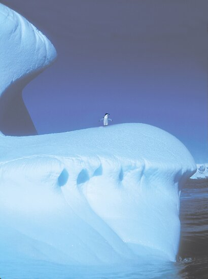 Umm Could you help me down- Penguin,Antarctica by Cathleen Knutson