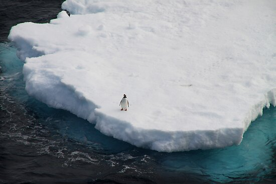 The Lone Penguin by Robyn Lakeman