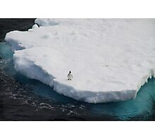The Lone Penguin Photographic Print