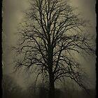 Foggy Morn' by Julesrules